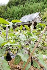 0909 吉野町/東 史 さん