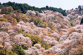 1204 吉野町/一杉 甲子彦さん、紺谷 與三一さん
