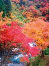 1411 野迫川村/中村 雅昭 さん