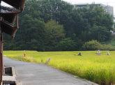 1611_奈良市/大野 收一郎 さん