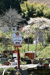1706_めだか街道 代表 枡田 秀美 さん