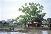 1808 奈良民俗文化研究所 代表 鹿谷勲さん